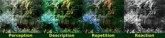 Perception Description Repetition Reaction