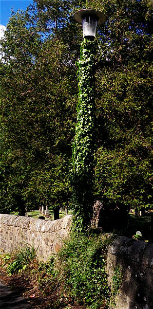 ivy grown green lamppost
